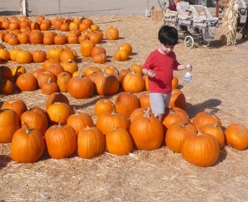 Diego pumpkins copy