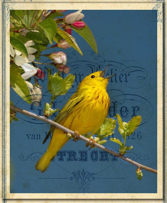 Bird fondo