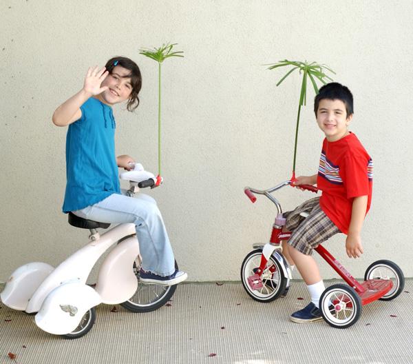 Palm tree bikes copy