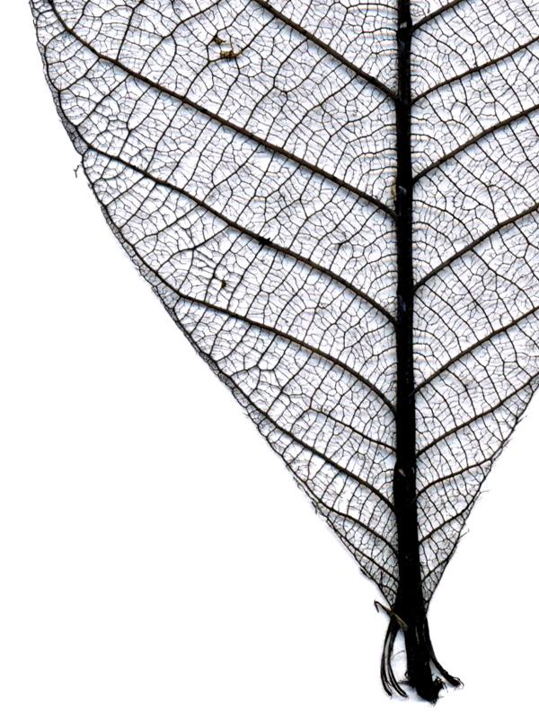 Leaf big small