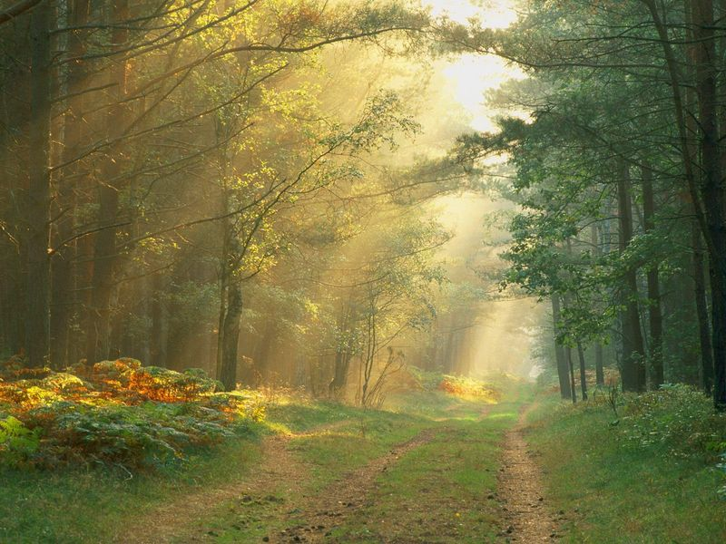 Sun_Rays_in_the_Forest_Germany