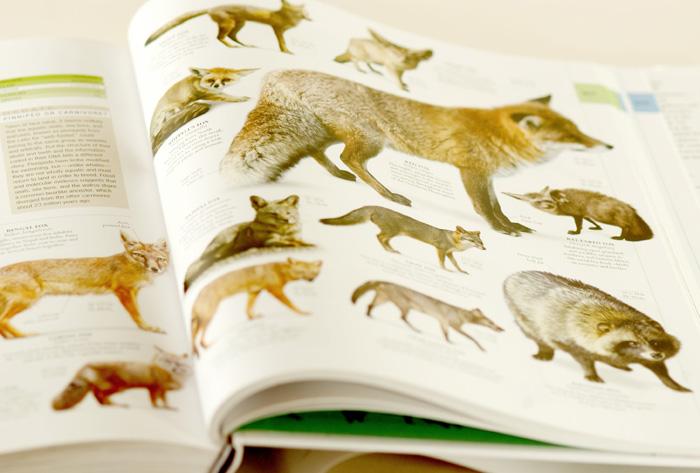 Fox book page. small