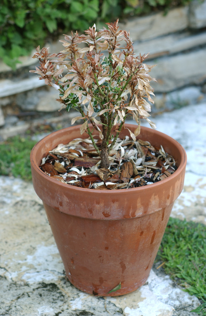 Plant copy