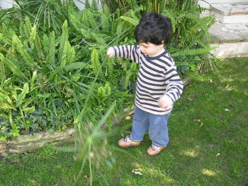 Diego_plants_copy